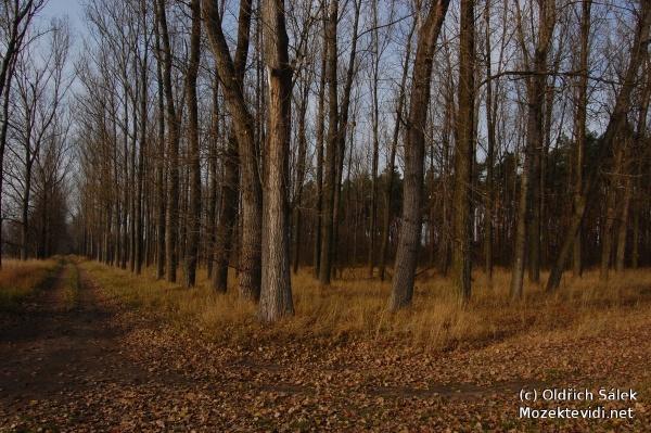 Naše lesy na podzim